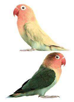 Safari Friends Lovebirds (set of 2 wall stickers)