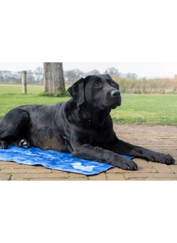 Cool dog mat