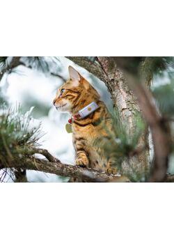 BARFmenu : kat variatie-doos (20x250 gr)