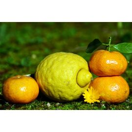 Lemon & Mandarin