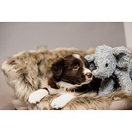 Kentucky dog toy elephant Elsa