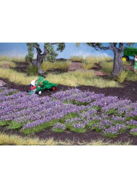 NOCH07136/Lavendel
