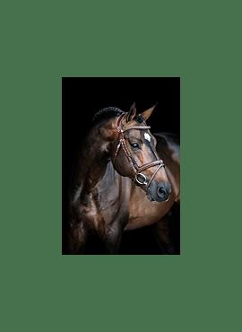 Hoofdstel Pro Selected Legendary